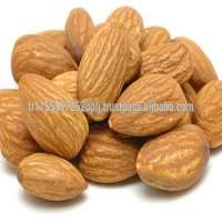 Almonds Almond Nuts Raw Bitter and Sweet Kernels Ships in