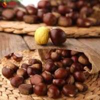 New Crop Organic Bulk Fresh Chestnuts