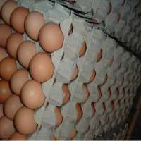 Fresh White & and Brown Chicken Eggs Fresh Table Eggs