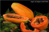 Indian Fresh Papaya