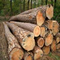 Pine wood logs Manufacturer