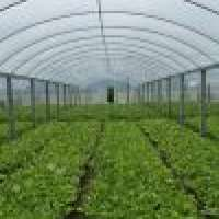 Multi Span Walkin Greenhouse Manufacturer