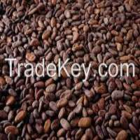 dry cocoa beans Manufacturer
