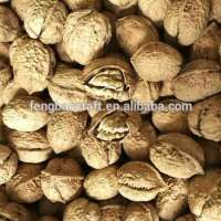 Oganic Walnuts Thin Shell Or Kernel without Shell  Manufacturer