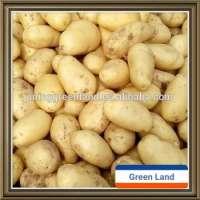 china potato