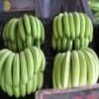 Fresh Banana Manufacturer