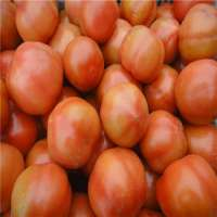 Fresh red and pink tomato  Manufacturer