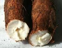 Cassava , plantain