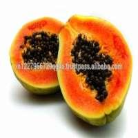 Fresh Tropical Orange Papaya Manufacturer