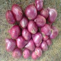 fresh Red Shallot Onion Manufacturer