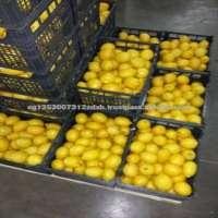 Fresh Green Lime Lemon  Manufacturer