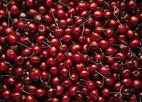 High Quality Fresh Cherry