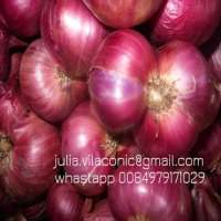 Shallot Red onion  Manufacturer