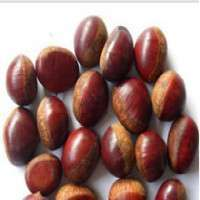 Fresh Packed Chestnut