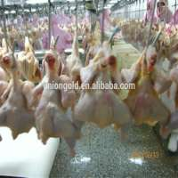 Frozen Halal Chicken without head,neck,liver,feet