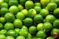 Quality Lime Manufacturer
