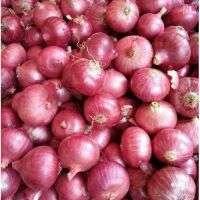 Onion Manufacturer