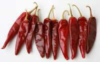 Red Chillies Manufacturer