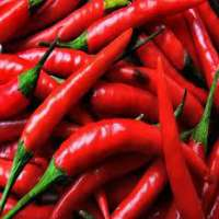 Red Chili capsicim Manufacturer