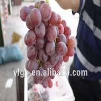 fresh red grape Manufacturer
