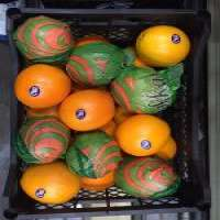 Fresh Oranges Manufacturer