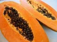 Organic Papaya Manufacturer