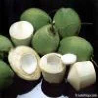 desiccated coconut nata de coco coconut milk Manufacturer