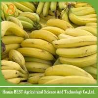 banana importer