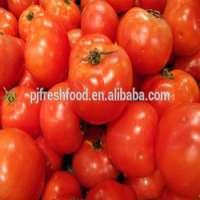 Fresh Tomato  Manufacturer