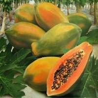 Fresh Papaya /Tangerine