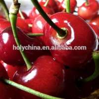 red cherry Manufacturer