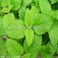 Peppermint Oil Pure Manufacturer