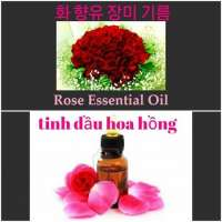 Rose essential oil and powder Manufacturer