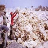 Sheep Wool Manufacturer