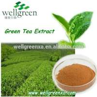 green tea leaves extract water Manufacturer