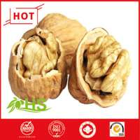 natural and pure drier Walnuts Chile Manufacturer