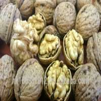 Chile In Shell Walnut Serr JbLg Manufacturer