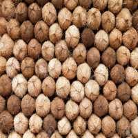 Semi Husked CoconutsFresh Semi husked matured Coconut