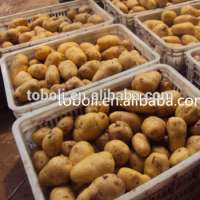 Fresh Holland potato  Manufacturer