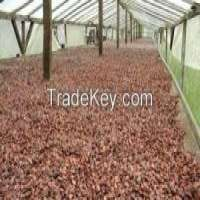 NATURALLY DRIED COCOA BEANS CAMEROON Manufacturer