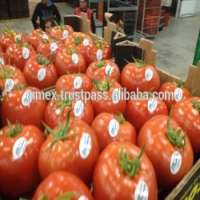 FRESH TOMATO Viet Nam Manufacturer