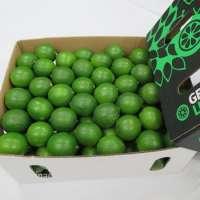 Vietnam Fresh Seedless Lime Manufacturer