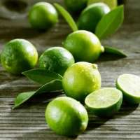Fresh Seedless Lime  Manufacturer
