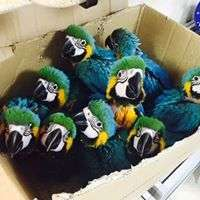 Macaw Parrot and  Eggs for Sale Manufacturer