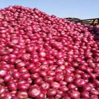 Fresh indian red onion Manufacturer