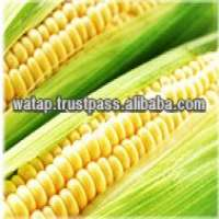 Fresh Canned Preserved Sweet Corn Manufacturer