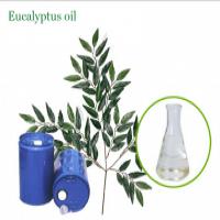 Natural pure essential oil eucalyptus oil  Manufacturer